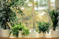 Системы полива домашних растений